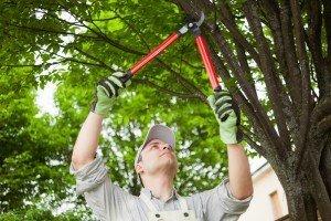 Tree-Pruning-Colorado-Springs-Colorado-Shears-Clippers