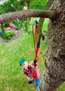 Tree-Trimming-Pole-Extension-Trimmer-Cutting-Colorado-Springs
