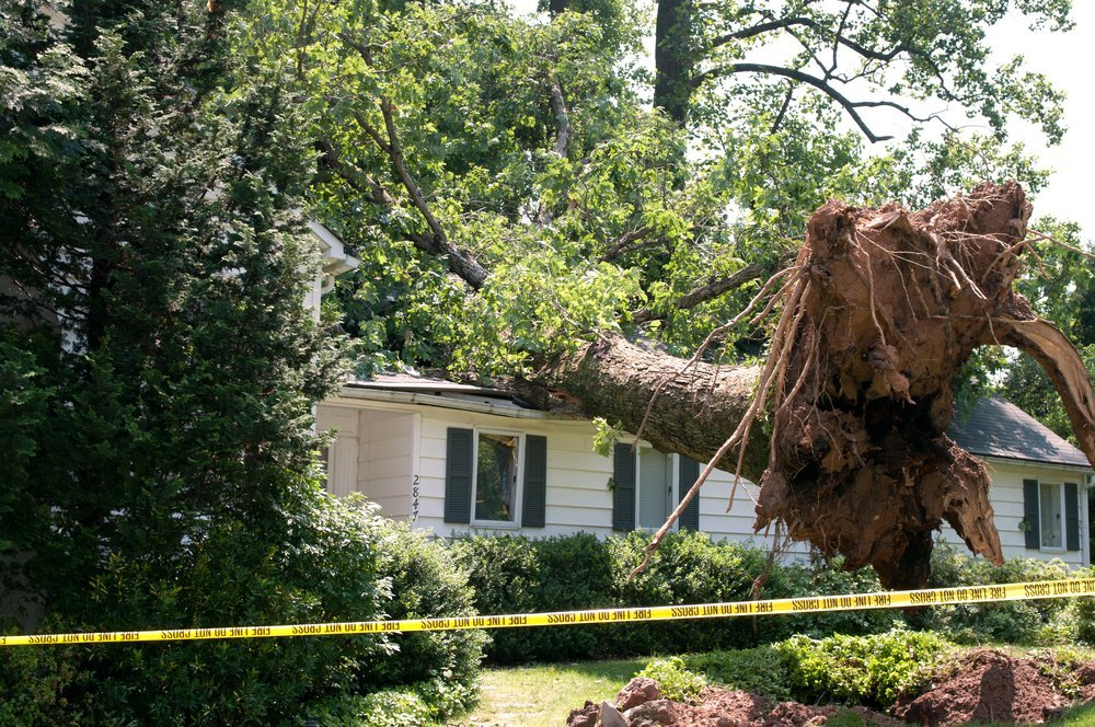 tree-falling-on-house